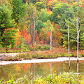 Autumn Beaver Pond by Joshua Bales