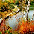 Autumn Birch Lake Boardwalk by Patricia L Davidson