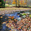 Autumn Birch River by Thomas R Fletcher