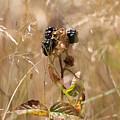 Autumn Blackberries by Jackie Tweddle