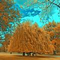 Autumn Blaze by Mykel Davis