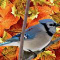 Autumn Blue Jay by Debra     Vatalaro