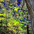 Autumn Blue  by Will Borden