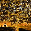 Autumn Boredom by Milan Karadzic