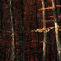Autumn Branch by Svetlana Sewell