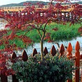 Autumn Bridge by Caroline  Urbania Naeem