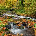 Autumn Bridge by Mike Dawson