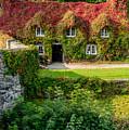 Autumn Brilliance by Adrian Evans