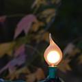 Autumn Bulb by Liza Eckardt