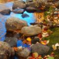 Autumn By The Creek by Tara Turner