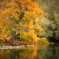 Autumn Calm by Carol Groenen