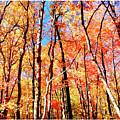 Autumn Canopy by A Gurmankin