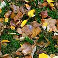 Autumn Carpet 002 by Dorin Adrian Berbier