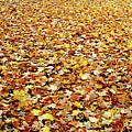 Autumn Carpet by Debbie Oppermann
