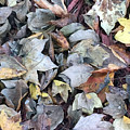Autumn Carpet II by James Pinkerton