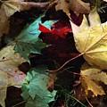 Autumn Carpet by RC DeWinter