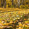 Autumn Carpet by Vadim Grabbe