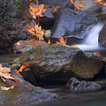 Autumn Cascades by Mike  Dawson