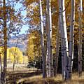 Autumn Chama New Mexico by Kurt Van Wagner