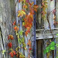 Autumn Collage by Herbert L Fields Jr
