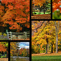 Autumn Collage by Maria Keady