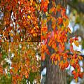 Autumn Collage by Sonali Gangane