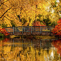 Autumn Color By The Pond by Teri Virbickis