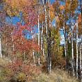 Autumn Color In Colorado by Cascade Colors
