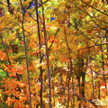 Autumn Colored by Jeelan Clark