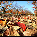 Autumn Colors 04 by Arik Baltinester