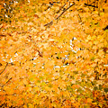 Autumn Colors #2 by Robert J Caputo