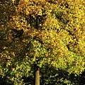Autumn Colors 8 by Rudi Prott