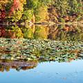 Autumn Colors by Amanda Kiplinger