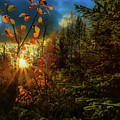 Autumn Colors At Sunset by Rose-Marie Karlsen