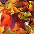 Autumn Colors by Diamond Bitzer