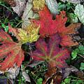 Autumn Colors by Diane E Berry