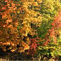 Autumn Colors II by Amanda Kiplinger