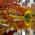 Autumn Colors In Central Park New York City by Sabine Jacobs