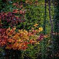Autumn Colors In Ireland by James Truett