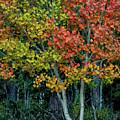 Autumn Colors by Joy Watson