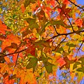 Autumn Colors by Lisa Wooten