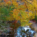 Autumn Colors Of Reflection by Gina Sullivan
