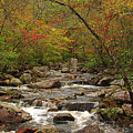 Autumn Colors On Pickle Creek 2 by Greg Matchick