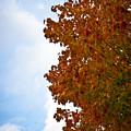 Autumn Colors by Robert J Caputo