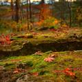 Autumn Colors by Ryan Heffron