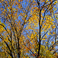Autumn Colors by Stephen Anderson