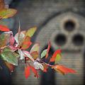 Autumn Colour by Graeme Mell