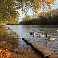 Autumn Colours At Sunbury On Thames Surrey Uk by Julia Gavin