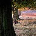 Autumn Colours by John Bradburn