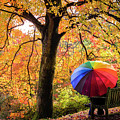 Autumn Colours by Kelvin Trundle